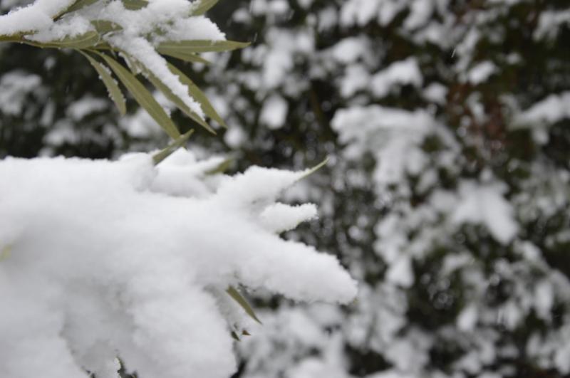 La Neige à Toulouse
