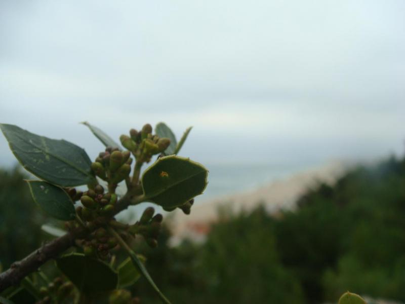 Plante et mer.